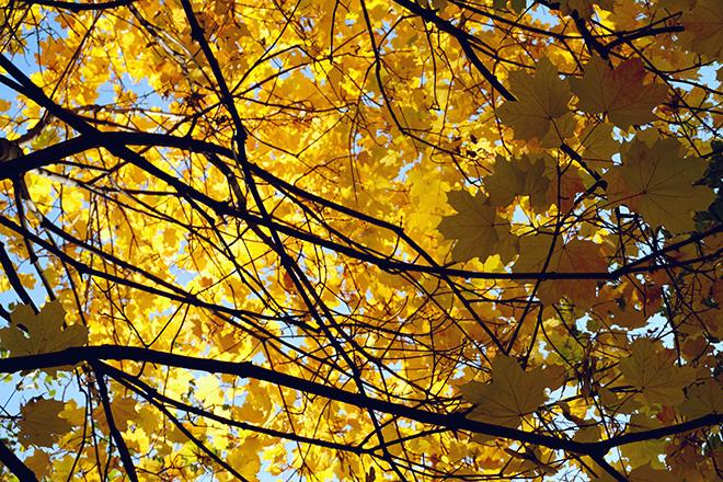 Время Осени