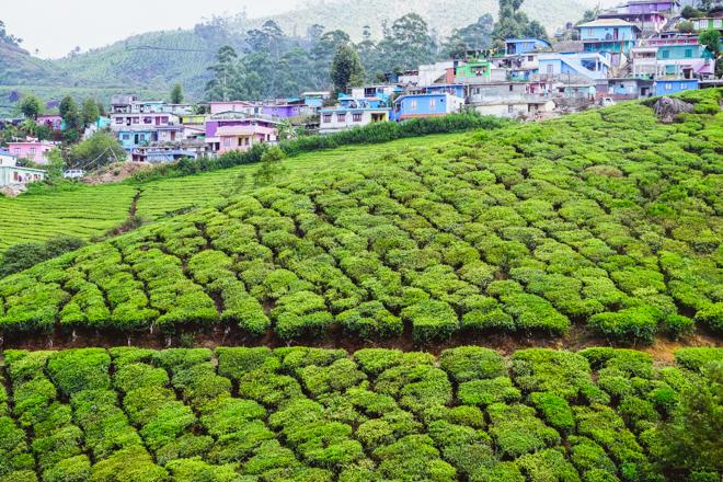 Муннар - Южная Индия